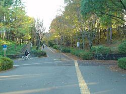 20091115-153003.jpg