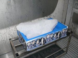 南極の氷実物(触れました)