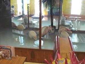 メヒコのレストランに居るフラミンゴ